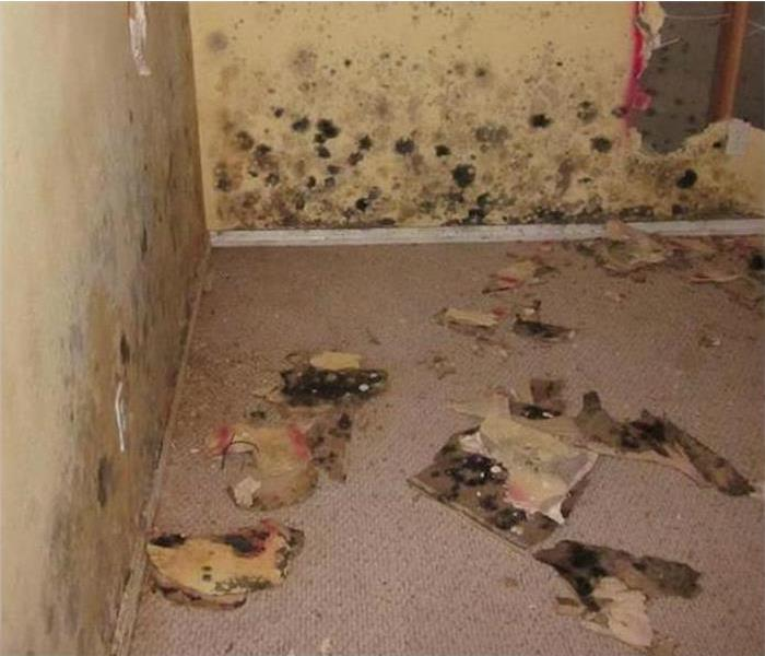 Mold Damage is Secondary Damage