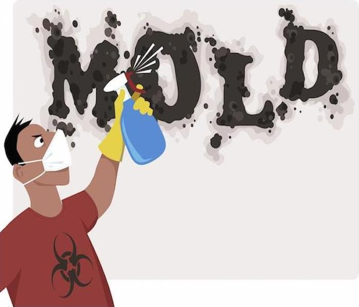 Mold Remediation 5 Keys to Removing Mold