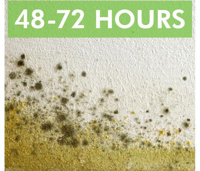 Mold Remediation Finding and Treating Mold in Your Commercial Property