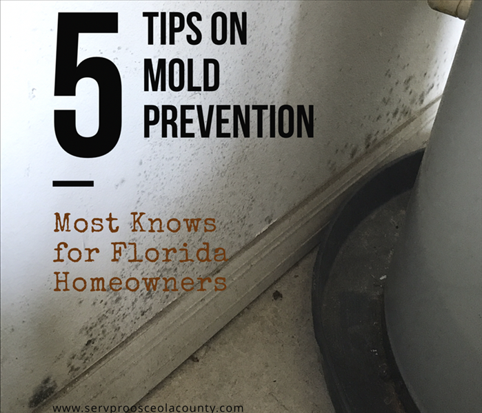 Mold Remediation 5 Mold Prevention Tips