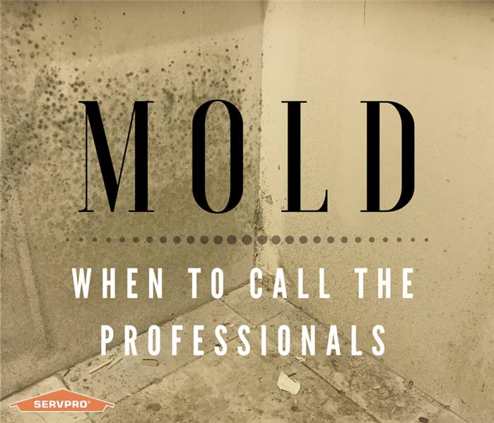 Mold Remediation Mold: When to Call the Professionals