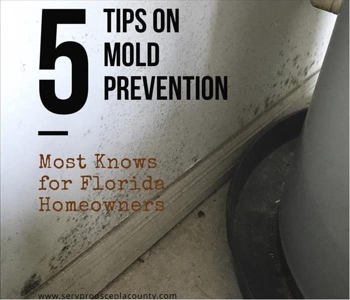 Mold Remediation  5 Tips on How to Prevent Mold.